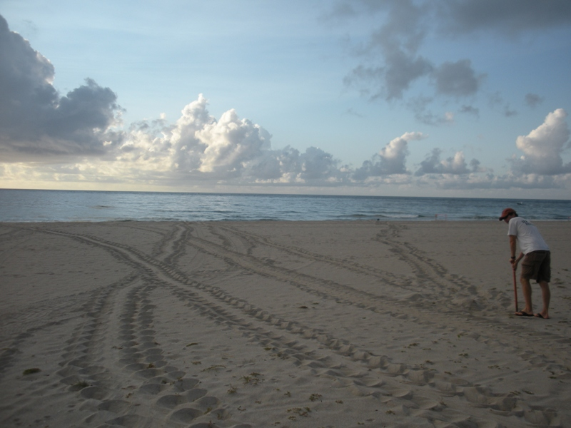 several sea turtle tracks and a marine turtle specialist working on beach