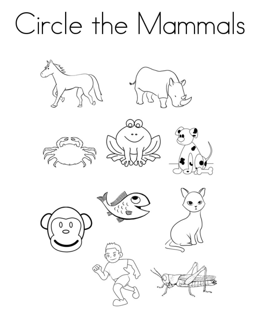 Circle the Mammals Activity