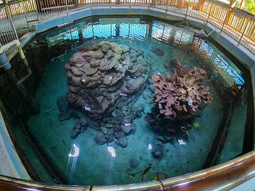 colorful coral reef sculpture in aquarium