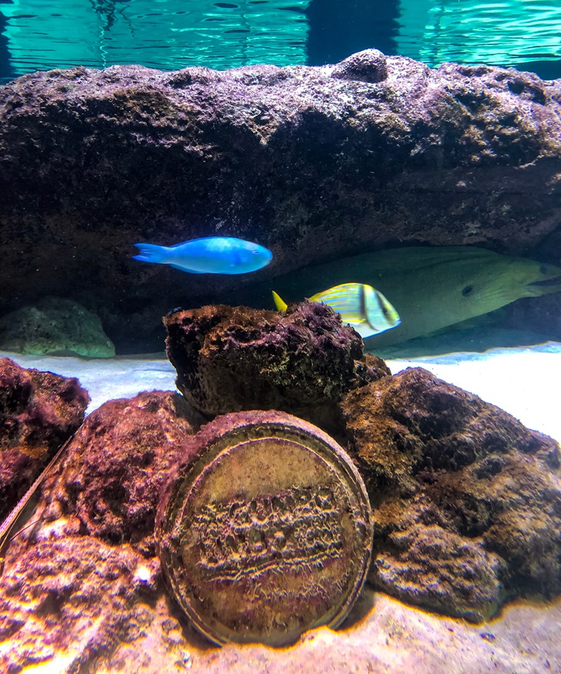 colorful fish and an eel under rock.