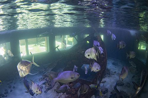 artificial shipwreck in aquarium