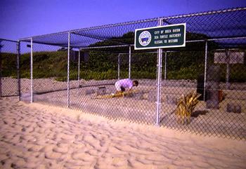 biologist in sea turtle hatchery on beach