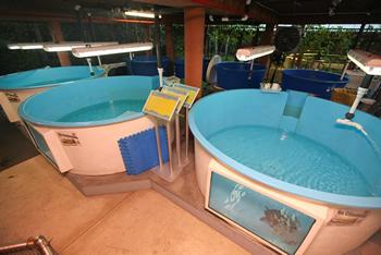 sea turtle rehabilitation tanks