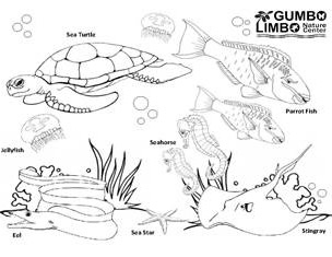 sea life coloring page