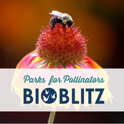Parks for Pollinators, BioBliz