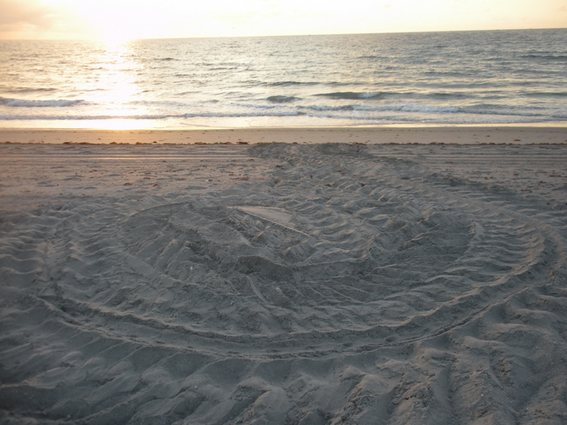 leatherback nest on beach