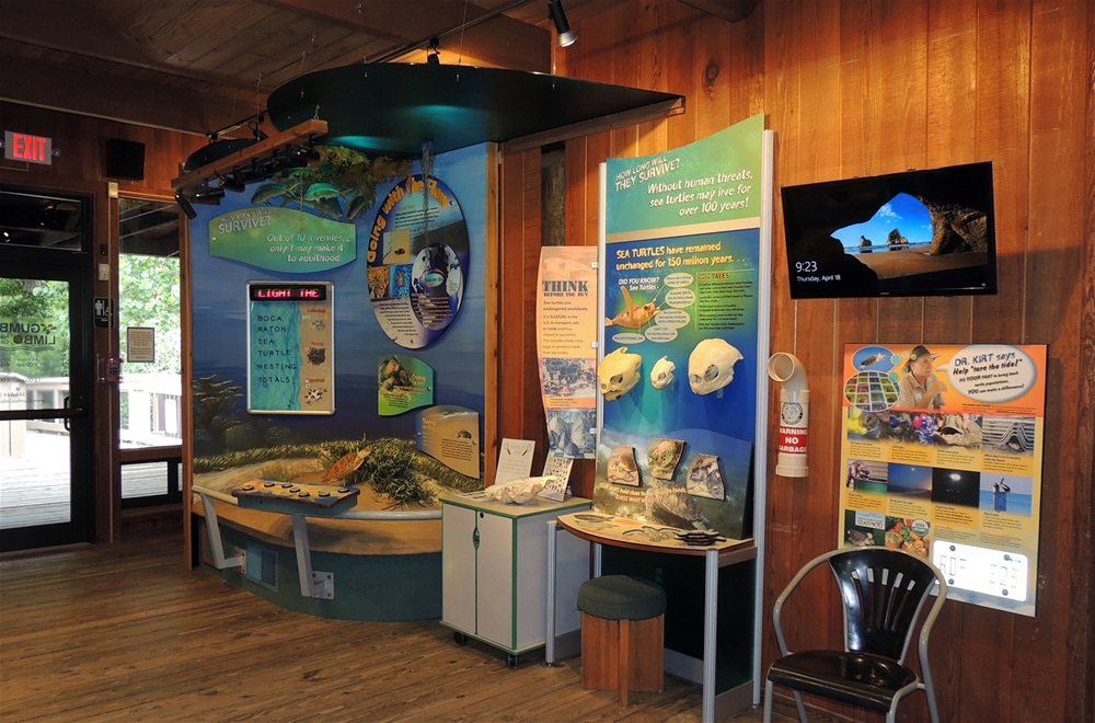 exhibit about sea turtle with mounted skulls, puzzle, walll panels, tv screen