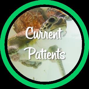 Open current patients webpage.