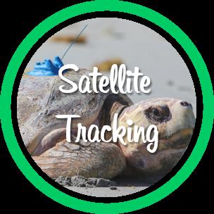 Open sea turtle satellite tracking webpage.