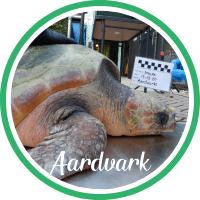 Close up of a loggerhead sea turtle laying in a bin.
