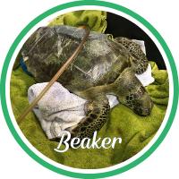 Open Beaker's patient page.