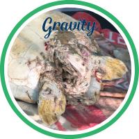 Open Gravity's sea turtle patient profile.