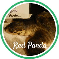 Open Red Panda's patient page.