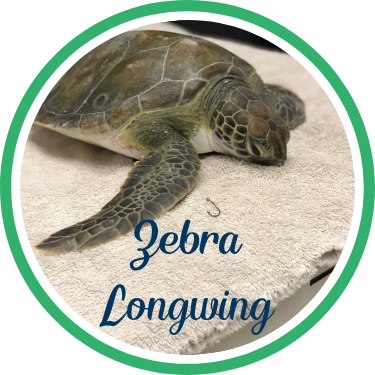 Open Zebra Longwing's sea turtle patient profile.