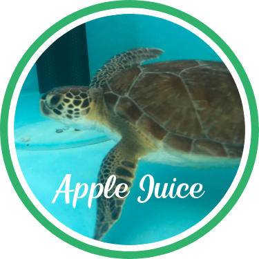 Open Apple Juice's sea turtle patient profile.