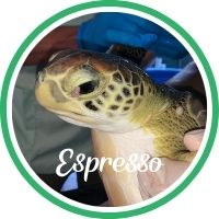 Open Espresso's sea turtle patient profile.