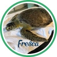 Open Fresca's sea turtle patient profile.
