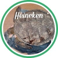 Open Heineken's sea turtle patient profile.