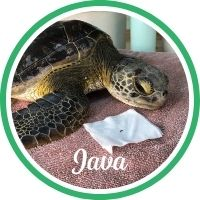 Open Java's sea turtle patient profile.