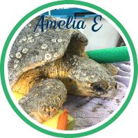 Open Amelia Earhart's patient page.