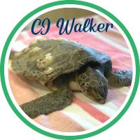 Open CJ Walker's patient page.