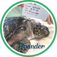 Open Flounder's patient page.