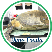 Open Jane Fonda's patient page.