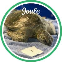 Open Joule's sea turtle patient profile.