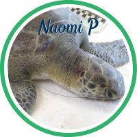 Open Naomi Parker's patient page.