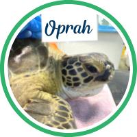 Open Oprah's patient page.