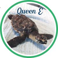 Open Queen Elizabeth's patient page.