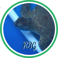 Open Ruth Bader Ginsberg's sea turtle patient profile.