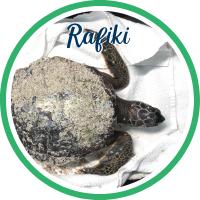 Open Rafiki's patient page.