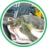 Open Sally Ride's patient page.