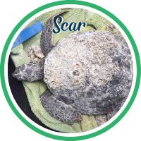 Open Scar's sea turtle patient profile.