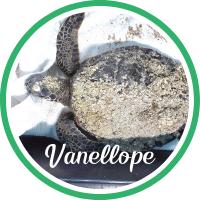 Open Vanellope's sea turtle patient profile.