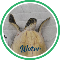 Close up of a green sea turtle laying on a treatment table.