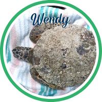 Open Wendy's sea turtle patient profile.
