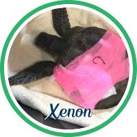 Open Xenon's sea turtle patient profile.