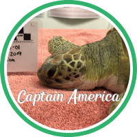 Open Captain America's sea turtle patient profile.