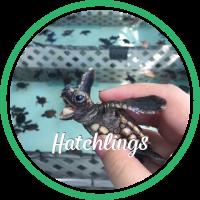 Open Hatchlings Patient Profile.