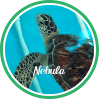 Open Nebula's sea turtle patient profile.