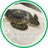 Open Nightcrawler's sea turtle patient profile.