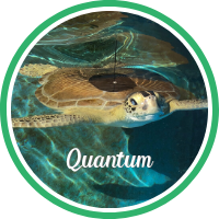 Open Quantum's sea turtle patient profile.