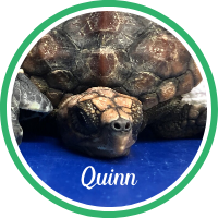 Open Quinn's sea turtle patient profile.