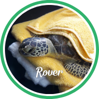 Open Rover's sea turtle patient profile.