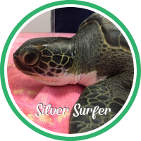 Open Silver Surfer's sea turtle patient profile.