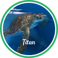Open Titan's sea turtle patient profile.