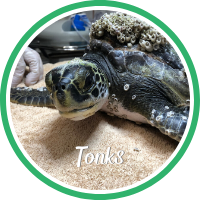 Open Tonk's sea turtle patient profile.