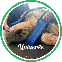 Open Universe's sea turtle patient profile.